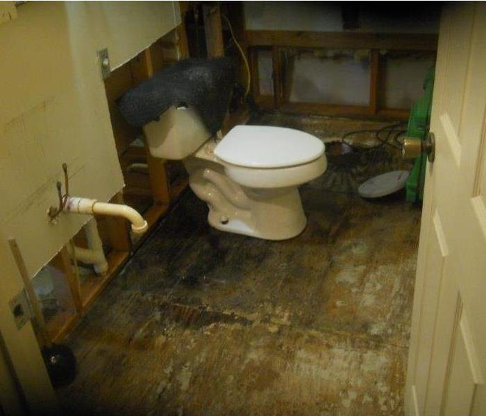 Mold Damage Knoxville Bathroom