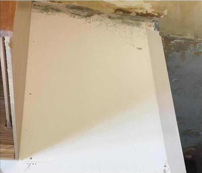 Commercial What Causes Mold Regrowth?